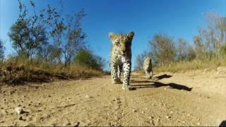 【クラブツーリズム】南部アフリカの魅力をご紹介