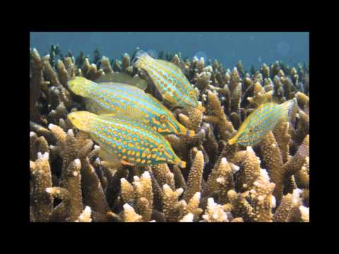 Guam Marine Life Book - Kickstarter Video-1.mov