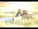 Okavango Drama