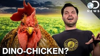 Join The TestTube Plus Conversation On Chickens & Dinosaurs!