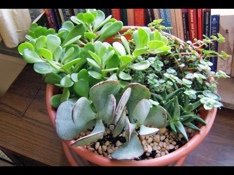 Best House Plants Best House Plants For Oxygen Youtube
