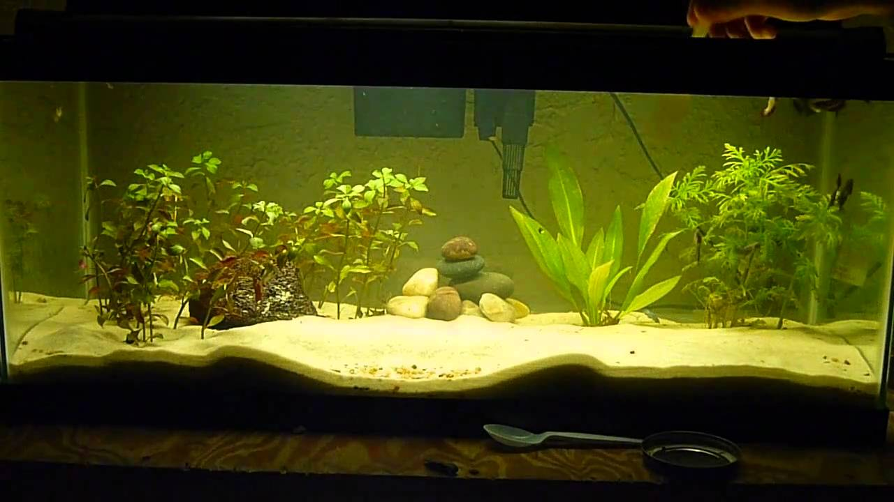20 gallon long female betta community tank feeding time for How many fish in a 20 gallon tank