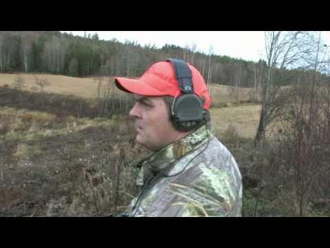 Hundelos 2010, Drever valpen på sin første jakttur i skogen.