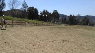 Trigger the Golden Palomino Horse at Oak Meadows Ranch, Wildomar CA