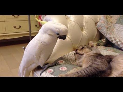 ПОПУГАИ ПРИКОЛЫ Смешные и талантливые попугаи видео Приколы с попугаями Amazing Funny Parrots