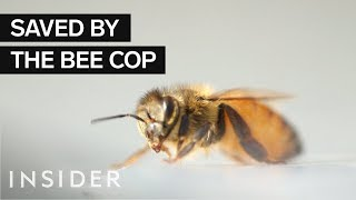 What It Takes To Be NYPD's Elite Bee Cop