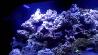 Higorc 72 gallon Bowfront Reef Tank w/ 2 Tao Tronics 120W LEDs