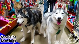 Dogs Go Shopping at PetSmart | Petsmart Haul for Dogs
