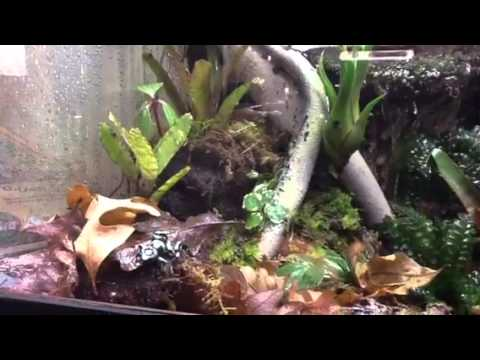 Diy Poison Dart Frog Vivarium Terrarium Youtube