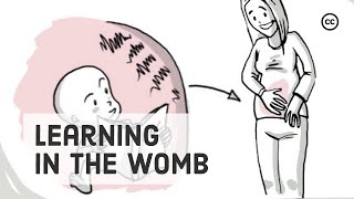 Prenatal Development: What We Learn Inside the Womb