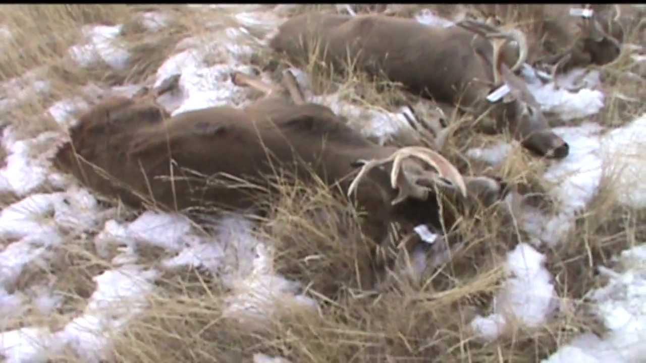Monster Bucks In The Wild