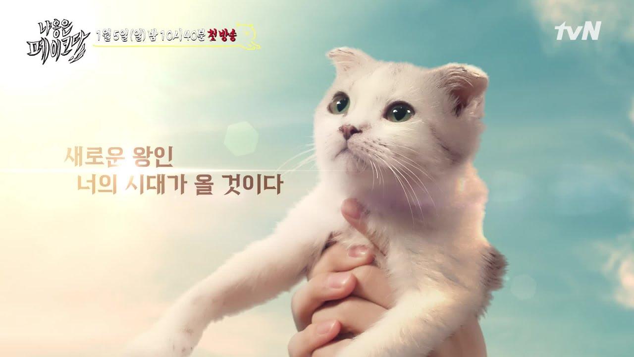 [티저] 평생 냐옹이인 척 하던 고양이의 등장? '놔라! 내가 니 장난감이냐?' | 냐옹은 페이크다 Decoding Meow EP.1