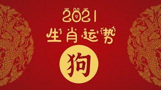 2021年十二生肖运势——狗 - YouTube