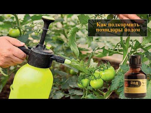 Вопрос: Можно ли опрыскивать помидоры молоком с йодом и мылом Какой рецепт?