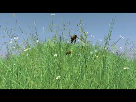 Le déclin des abeilles