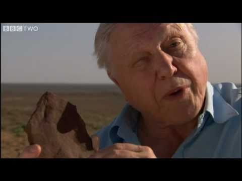 Body Structure - David Attenborough's First Life - BBC Two