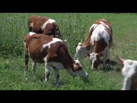 Armenia Fund: Transforming Agriculture in Tavush