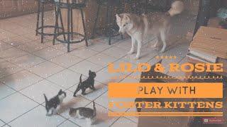 「もう心配いらないのよ、みんなで一緒に遊びましょう」子猫たちをあたたかく歓迎する犬と猫