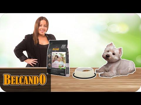BELCANDO | Das Besondere im Hundefutter #4 Chiasaat