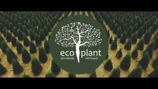 Питомник растений ЭКОПЛАНТ(, 2016-08-29T09:39:39.000Z)