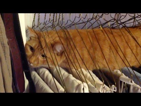 Cats Getting Stuck In Stuff