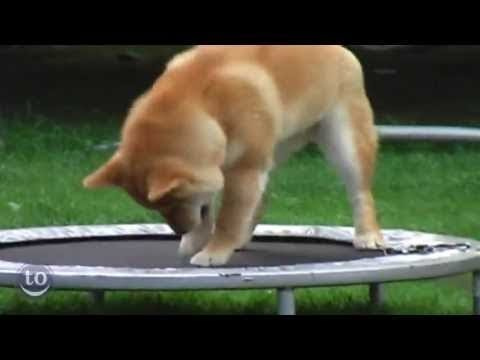 Funny Animals Jumping On Trampolines