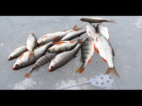 Видео Прогноз рыбалки
