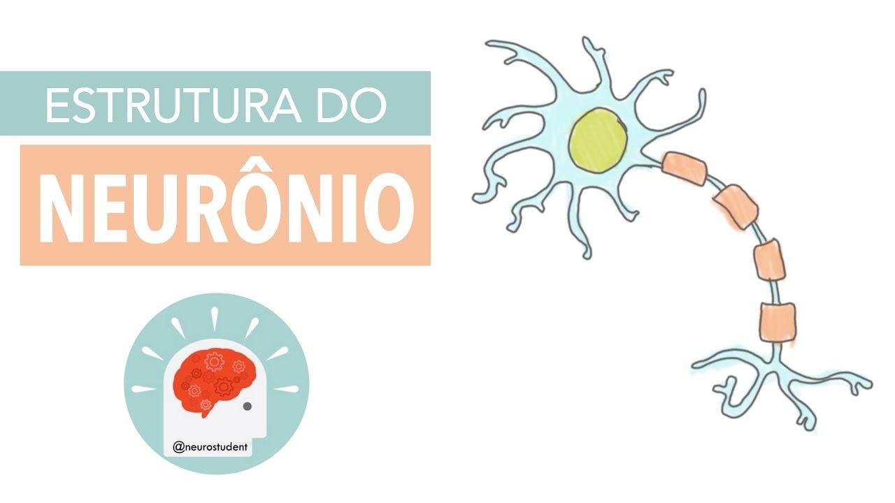 Sistema Nervoso Estrutura Do Neurônio Anatomia E Etc