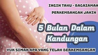 ingin tahu   bagaimana perkembangan usia janin 5 bulan dalam kandungan