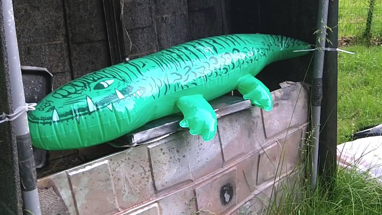 Delicieux 2013 6 28 CIST Crossman 1077 Inflatable Alligator