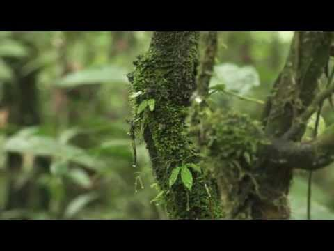 Rainforest Fund Water Project - 2014
