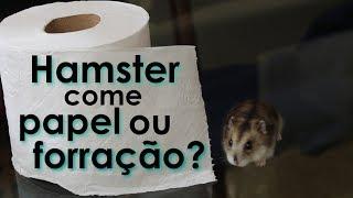 Hamsters comem papel higiênico ou forração da gaiola?