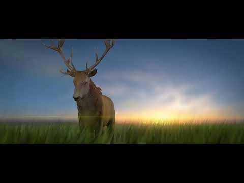 """Deer Walk"" CGI Animated short by -Cryptex animation"