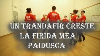 CUM SA DANSEZI UN TRANDAFIR CRESTE LA FIRIDA MEA ( PAIDUSCA) ! ! !