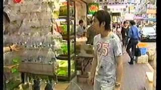 Sunny Discus Centre in Hong Kong Ben Aquarium Fish Farm 旭日水族 (美人魚) 七彩神仙 Tel:97793166