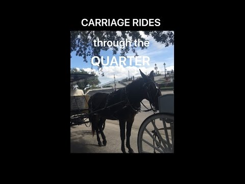 Carriage Rides Through The Quarter New Orleans