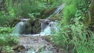 Жизнь  Вода – основа жизни