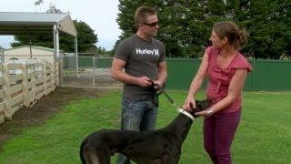 Greyhound Racing Victoria: Breeder Profile - Paul Westerveld