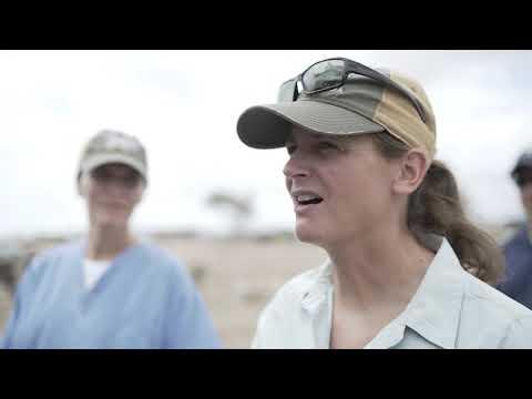 U.S. Army Veterinarians Promote Livestock Health In Assassan, Djibouti (2019) 🇺🇸