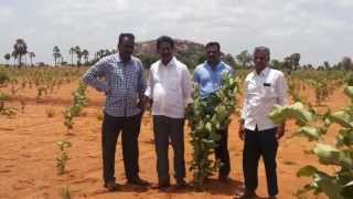 Svs Agro Farms | Hyderabad Red Sandal Wood Farms | Red Sandal Wood Farms In Hyderabad