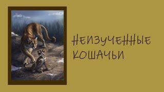 Неизвестные Животные Планеты Земля 028 - Неизученные Кошачьи