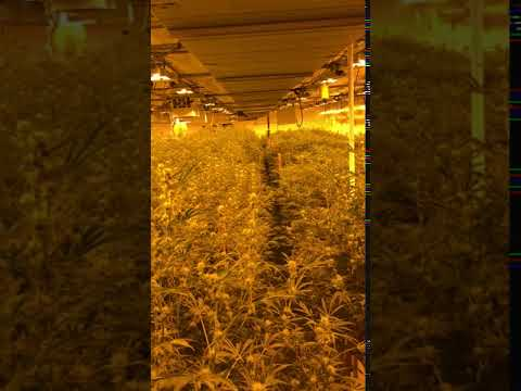Seven Leaves Indoor Grow Facility 3