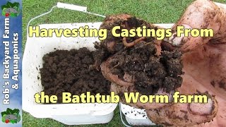 Harvesting worm castings from the Bathtub Worm farm..