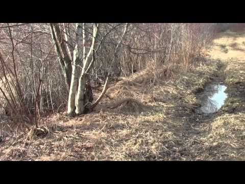 Neponset River Greenway Milton MA Fowl Meadow Part 2.