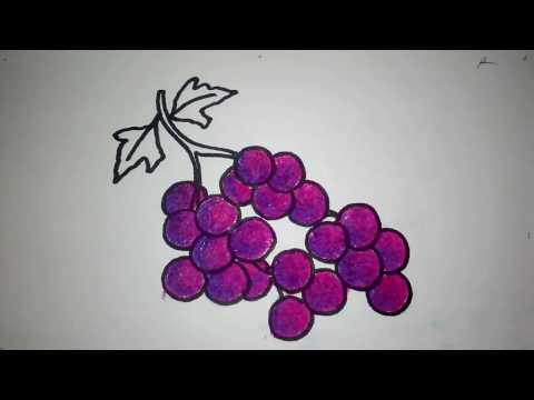 Cara Menggambar Anggur Untuk Anak