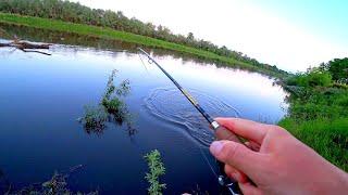 В этом месте клюёт всегда Рыбалка на закате с поклёвками вдогон Спиннинг на реке летом 2020