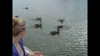 Mazury `09 karmienie kaczek.