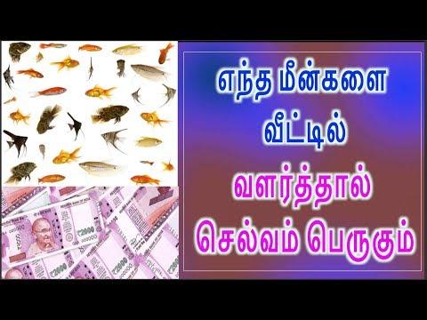 எந்த மீன்களை  வீட்டில்    வளர்த்தால்  செல்வம் பெருகும்  Money Fish