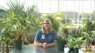 Indoor Plant Mainteinance - A Meijer Gardens Gardening Demonstration