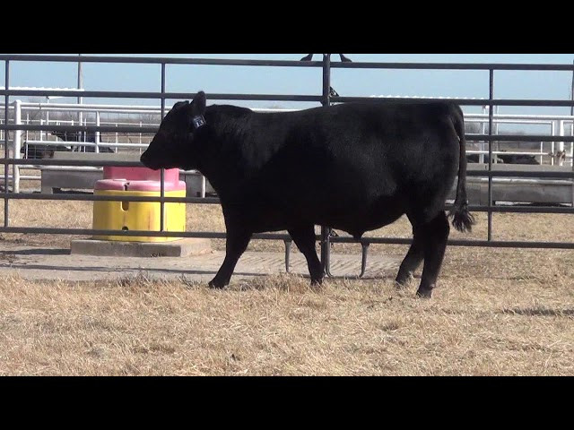 Express Ranches Lot 13